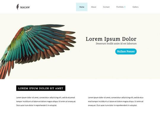 Szablon graficzny dostępny w pakiecie Click Web Unlimited - Macaw